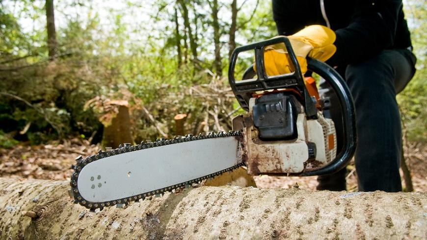 how much to charge for cutting down trees