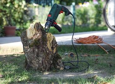 Remove tree stump