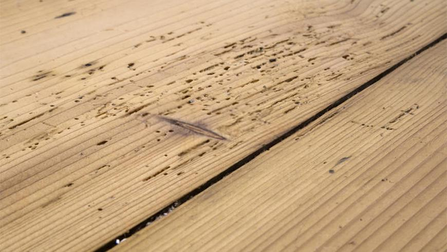 Cost to Treat Woodworm
